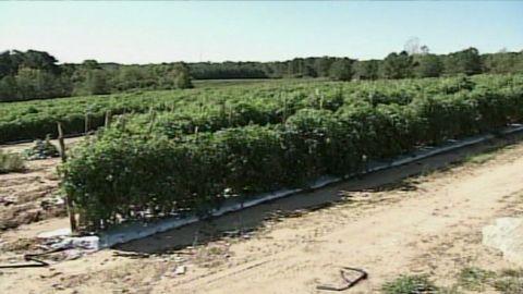 romo farm labor shortage_00002017