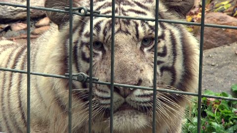 dnt todd exotic animals killed follow_00001412