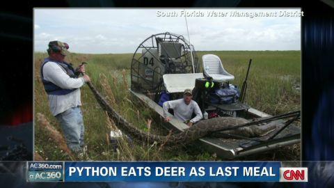 exp ac python eats deer_00002001