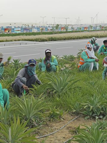 """Migrant workers in a """"green zone"""" in the UAE. """"These workers have noone to speak for them, neither in painting, photography, literature nor cinema,"""" writes Chancel."""