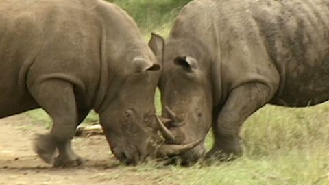 sweeney.rhino.relocation_00010121