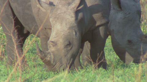curnow.safrica.rhino.war_00001227