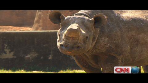 marketplace africa trade rhino horns_00032313