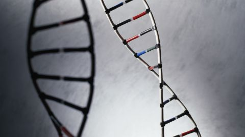 Genes besides the oxytocin receptor gene -- not to mention other, non-genetic factors -- influence social behavior as well.