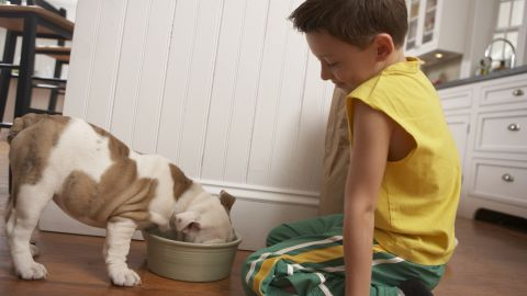 Read the label on your dog's food to make sure they're receiving a balanced diet.