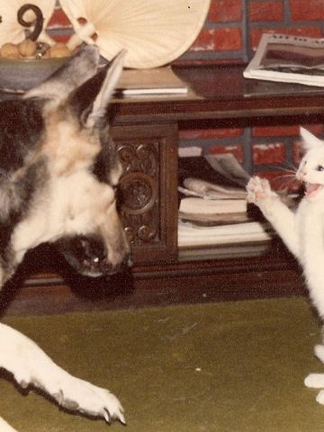 """Gretel, left, plays with Hansel, an adopted kitten. Anita de la Cruz used an Instamatic camera to take this photo in December 1977. """"It is special to have photos like these from the past to reminisce, laugh and share with others,"""" she said."""