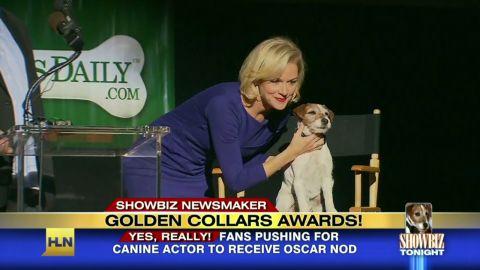 sbt golden collar award_00001814
