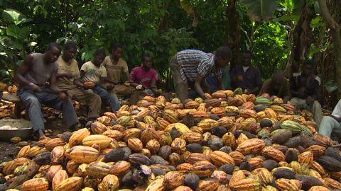 cfp pkg anderson cocoa lessons_00002918
