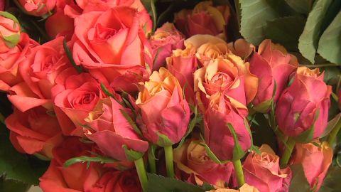 kapur india rose demand_00021119
