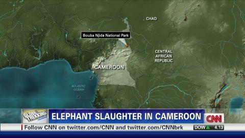nr intv cameroon elephant poaching_00000511