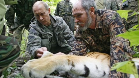 Assisted by a Russian scientist, Putin fixes a satellite transmitter to a tiger during his visit to the Ussuriysky forest reserve of the Russian Academy of Sciences in the Far East on August 31, 2008.