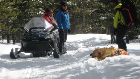 Rita the avalanche-rescue dog takes a break to play in the snow.