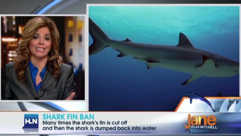 jvm.shark.finning _00015020