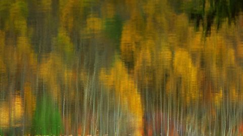 """""""In autumn (in Fukushima), the falling leaves colored the forest and the sweet scent of maple leaves merged with every breath that I drew in,"""" photographer Frances Tong says."""