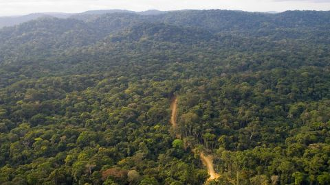 """About 80 per cent of Gabon is covered by forests, sheltering a rich variery of wildlife. The west African country recently branded itself """"Green Gabon"""" as part of plans to create the so-called """"green oil"""" that the country's ecosystem provides."""