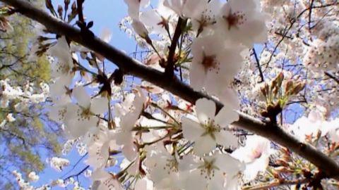 High pollen count _00011230