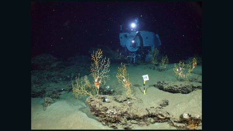 """Researchers found coral at the bottom of the Gulf of Mexico covered with """"black scum"""" and gooey brown mixture of materials."""