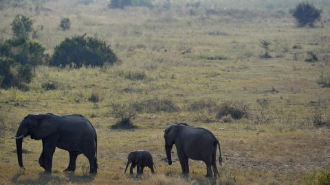 Kruger National Park is South Africa's biggest national park, situated in the Limpopo and Mpumalanga provinces.