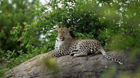 The park's wildlife also includes leopards, cheetahs, zebras, impalas and numerous birds.