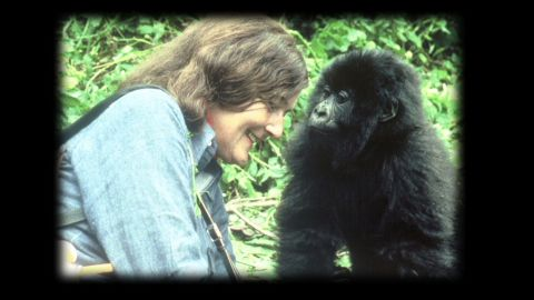 exp inside africa rwanda gorillas b_00022701