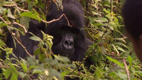 exp inside africa rwanda gorillas c_00042101