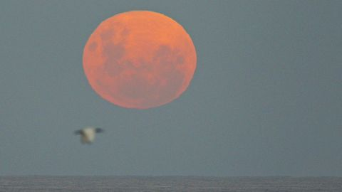 The moon rises over the Pacific Ocean on Sunday May 6, 2012, in Sydney, Australia.