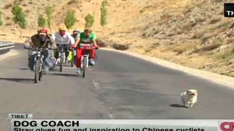 wr stray dog gives chinese cyclists inspiration_00000502