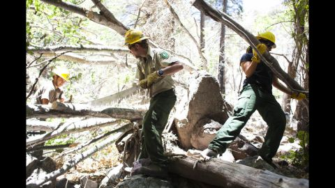 U.S. Forest Service rangers clear a tree with a handsaw.
