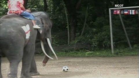 vo elephant soccer_00003420