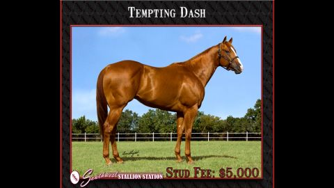 Tempting Dash is among the horses used in an alleged laundering operation, investigators say.