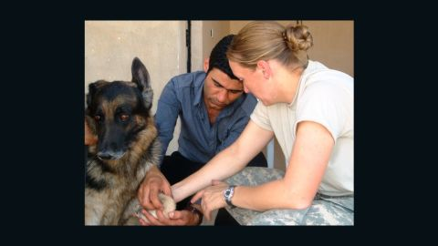 This photo from SPCA International shows one of the military dogs that the charity said it is bringing to the U.S. for adoption.