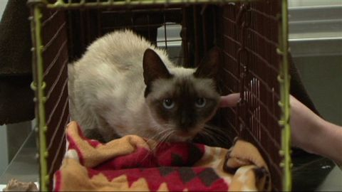 dnt tx owner finds cat after 4 years_00011703