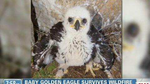 exp point marthaler baby eagle survives_00010501