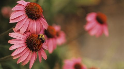 Thanks for making beautiful summer flowers possible, bees, but we're not so grateful for your throbbing, itching sting.If you've had an unfriendly encounter with a hornet, wasp or bee, try making a simple paste out of baking soda and water. Spread the paste on the sting to soothe it.