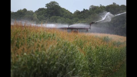 Corn is watered with an irrigation system near Fritchton, Indiana, on July 17.