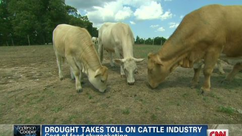 ac pkg lavandera drought cattle industry_00003512