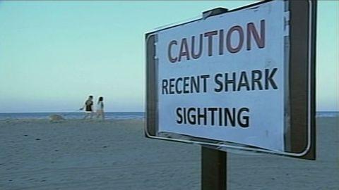 dnt ma possible shark attack_00003819