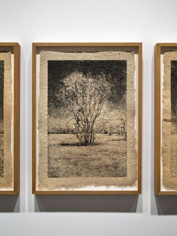 When photographing trees, Brandt has also used handmade paper using the wood from the park he's using as a location, like this silkscreen print of a tree in George Bush Park.