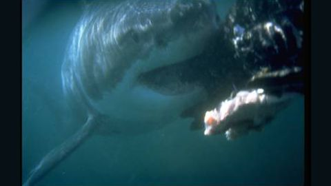 It's Shark Week on the Discovery network.