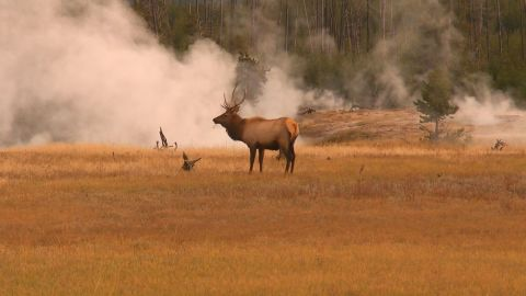 Underneath the picturesque Yellowstone National Park, in the U.S. state of Wyoming, is a supervolcano with the potential to change life on Earth.