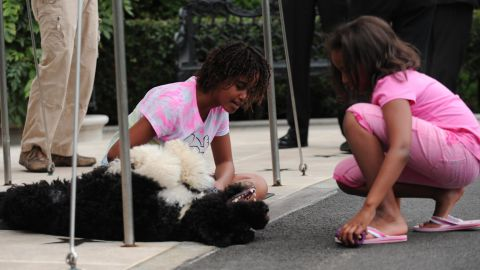 Sasha and Malia play with Bo as they wait for their dad's helicopter to land at the White House in September 2009.