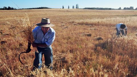 Farmers in across the region can receive daily weather forecasts and crop price information via SMS schemes, such as Chile's government-sponsored subscription service .