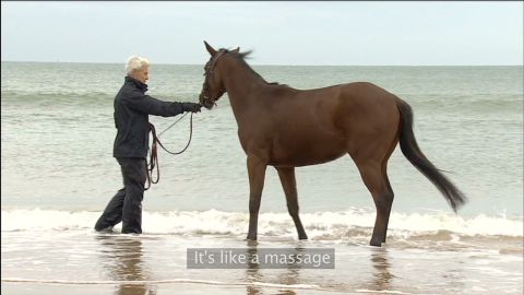 winning post horse rehab_00011727