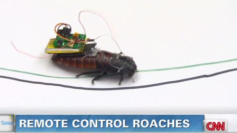 sstb.remote.control.roaches_00005830