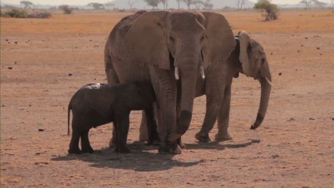 vo elephant calf rescued from well_00013111