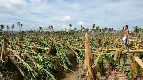 A worker surveys destroyed banana trees at a plantation in Montevista, Compostela Valley, on December 5.