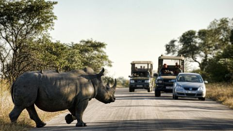 """More than 1,200 rhinos were illegally killed in South Africa in 2014 -- <a href=""""http://news.nationalgeographic.com/news/2015/01/150122-rhino-poaching-south-africa-conservation-science/"""" target=""""_blank"""" target=""""_blank"""">an increase of 20% on the previous year</a>, and the highest total since records began."""