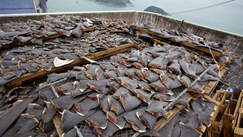 """Many restaurants and hotels in Hong Kong have chosen <a href=""""http://www.cnn.com/2011/11/22/world/asia/hotel-shark-fin-ban/index.html"""" target=""""_blank"""">not to serve shark fin soup</a>, and last year a Chinese State Council said they are planning to ban shark fin soup from being<a href=""""http://www.cnn.com/2012/07/03/world/asia/china-shark-fin/index.html"""" target=""""_blank""""> served at official banquets</a> in China."""