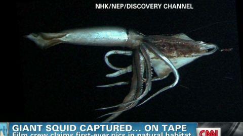 exp early ellis giant squid_00025030