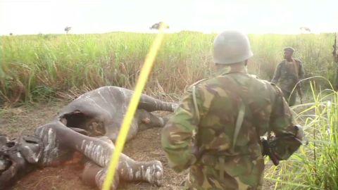 exp animal.poaching.amanpour_00002426.jpg